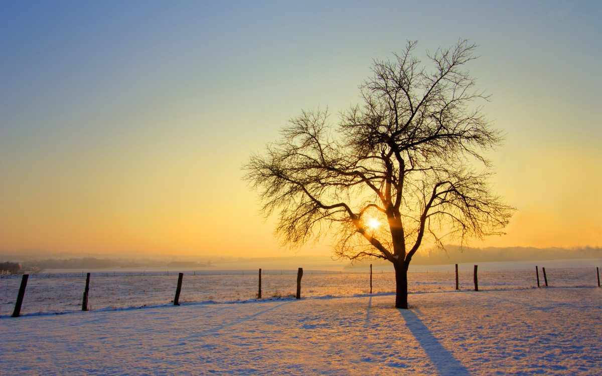 Winter-Sun-3